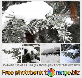 images free photo bank tOrange offers free photos from the section:  spruce-branches-snow