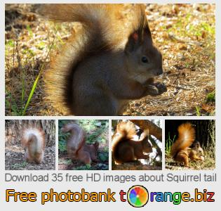 images free photo bank tOrange offers free photos from the section:  squirrel-tail