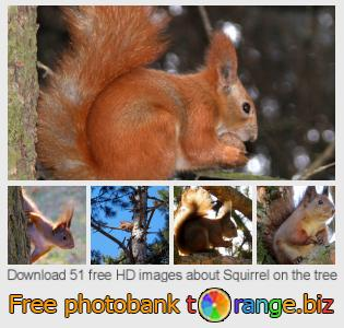 Image bank tOrange offers free photos from the section:  squirrel-tree