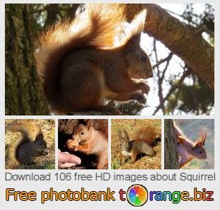 Image bank tOrange offers free photos from the section:  squirrel