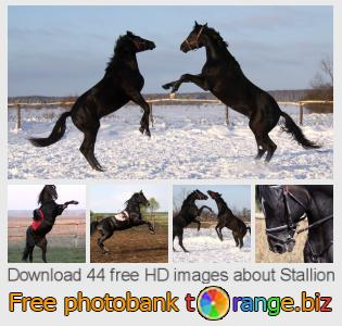 images free photo bank tOrange offers free photos from the section:  stallion