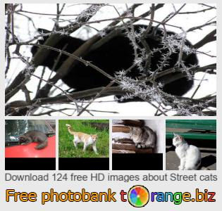 Image bank tOrange offers free photos from the section:  street-cats