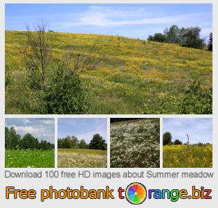 images free photo bank tOrange offers free photos from the section:  summer-meadow