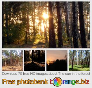 Image bank tOrange offers free photos from the section:  sun-forest