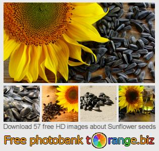 Image bank tOrange offers free photos from the section:  sunflower-seeds