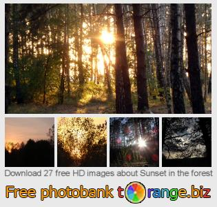 Image bank tOrange offers free photos from the section:  sunset-forest