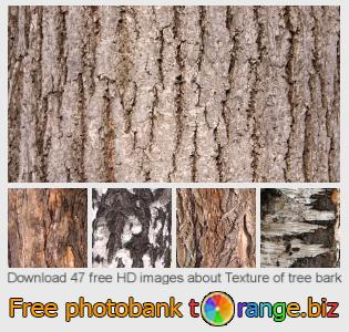images free photo bank tOrange offers free photos from the section:  texture-tree-bark