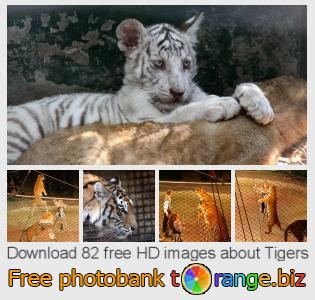 images free photo bank tOrange offers free photos from the section:  tigers