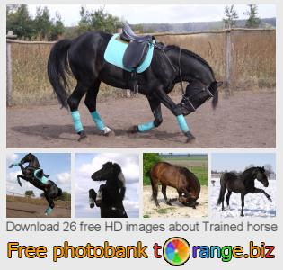 Image bank tOrange offers free photos from the section:  trained-horse