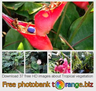 Image bank tOrange offers free photos from the section:  tropical-vegetation