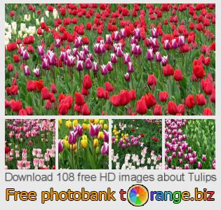 images free photo bank tOrange offers free photos from the section:  tulips