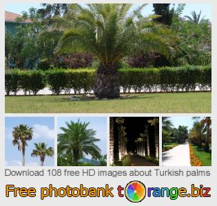 images free photo bank tOrange offers free photos from the section:  turkish-palms