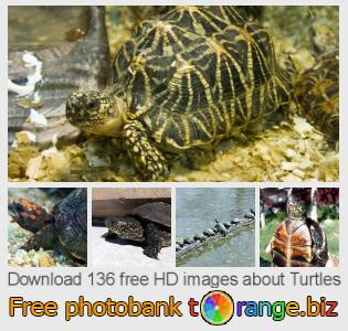images free photo bank tOrange offers free photos from the section:  turtles