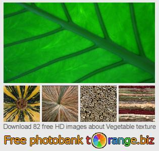 images free photo bank tOrange offers free photos from the section:  vegetable-texture