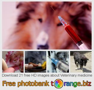 images free photo bank tOrange offers free photos from the section:  veterinary-medicine