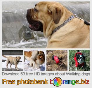 images free photo bank tOrange offers free photos from the section:  walking-dogs