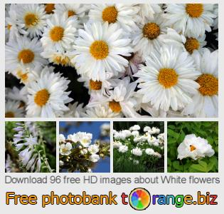 Image bank tOrange offers free photos from the section:  white-flowers