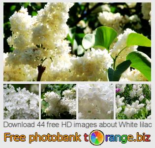 images free photo bank tOrange offers free photos from the section:  white-lilac