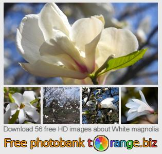 images free photo bank tOrange offers free photos from the section:  white-magnolia