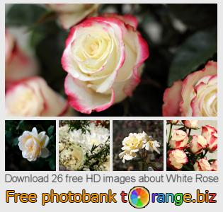 images free photo bank tOrange offers free photos from the section:  white-rose