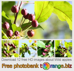 images free photo bank tOrange offers free photos from the section:  wild-apples
