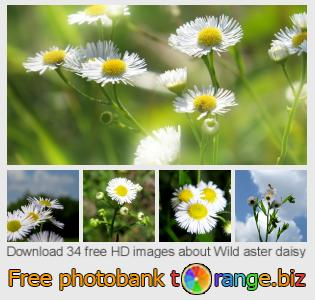 images free photo bank tOrange offers free photos from the section:  wild-aster-daisy
