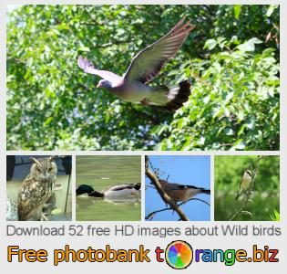 images free photo bank tOrange offers free photos from the section:  wild-birds