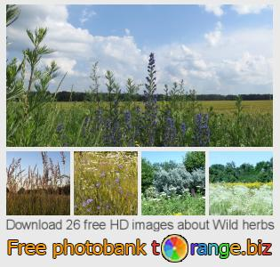images free photo bank tOrange offers free photos from the section:  wild-herbs