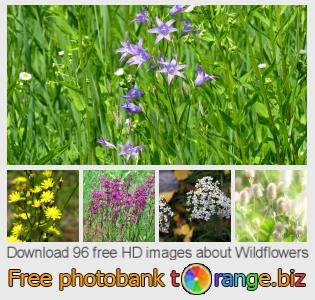 images free photo bank tOrange offers free photos from the section:  wildflowers