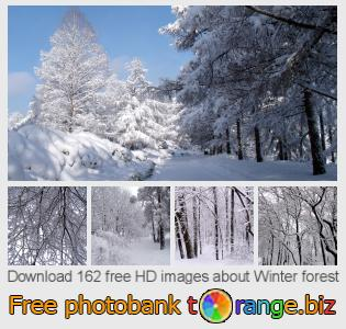 Image bank tOrange offers free photos from the section:  winter-forest