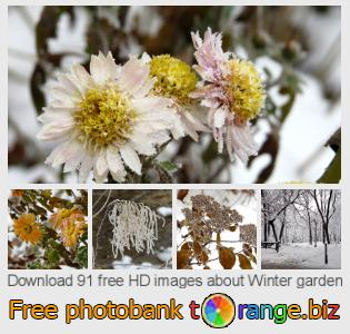 images free photo bank tOrange offers free photos from the section:  winter-garden