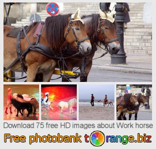 Image bank tOrange offers free photos from the section:  work-horse