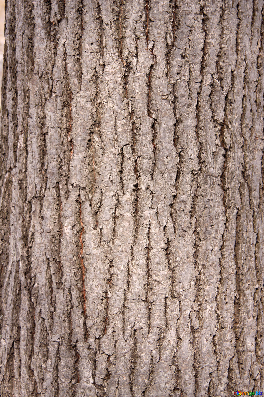 Texture of tree bark deciduous tree bark texture ecology № 849