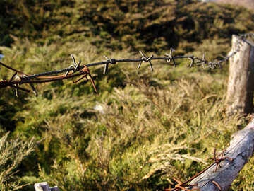 Barbed wire on the background of the undergrowth Tui №874