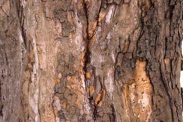 The damaged bark №847