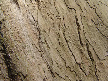 The bark of old wood №566
