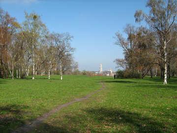 View kievskub Laurus through birch grove №582