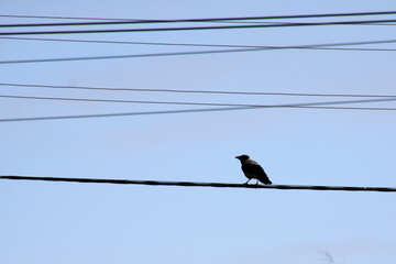 A crow was sitting on wires №938