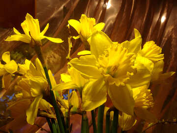 Bouquet of yellow daffodils on an orange background №526