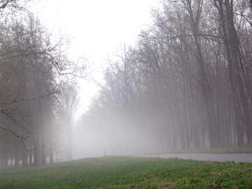 Strada nella nebbia №178