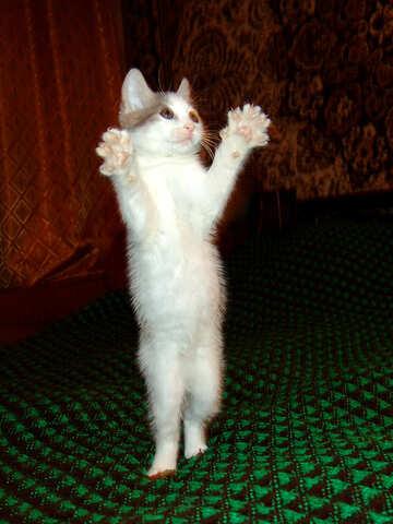 Cat claps №273