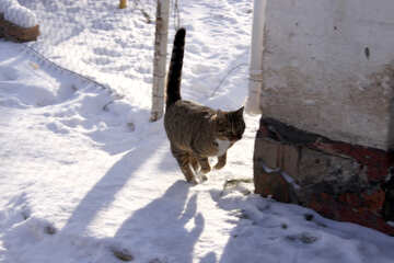 House cat in jump №682