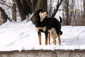 Wild  Dogs №713