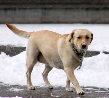 Purebred dogs walking in winter №712