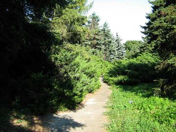 Traccia nel parco tra i pini №579