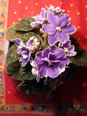 Flowers violet №454