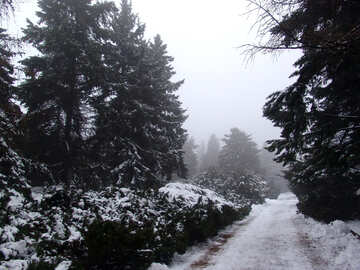Road in the coniferous forest №406