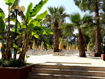Chaise lounges near pool under palm trees №193