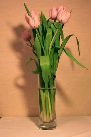 Colore rosa Tulipani №952