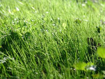Grass №553